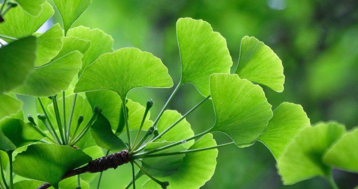 leaves-5258930_1280